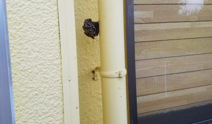 ハチの巣と台風